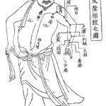 肺経(手の太陰肺経)